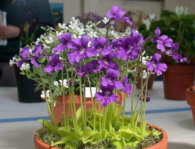 Най-чудатите растения! I002971