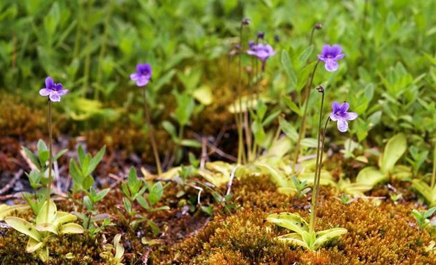 Най-чудатите растения! I002972