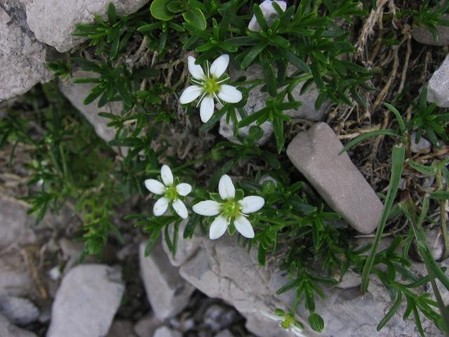 9b08dd3da92 Това може да стане девиз на всички тези, които са решили да оформят  градината си в източен стил.