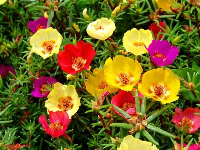 Какие цветы сеять в январе-феврале? КРАСИВЫЕ ИДЕИ ДЛЯ САДА