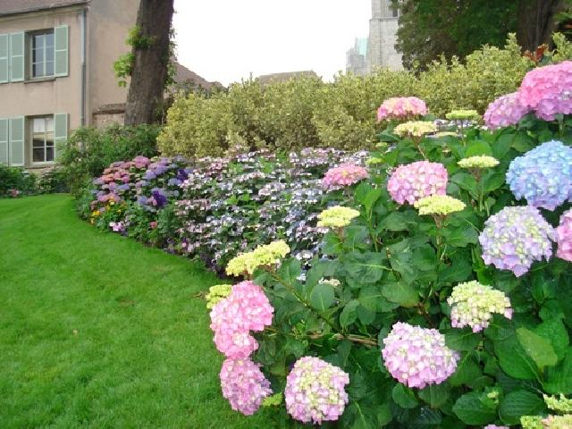 Какие красивые цветы можно посадить дома